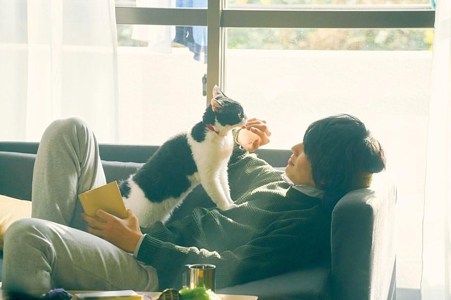 영화 고양이 여행 리포트